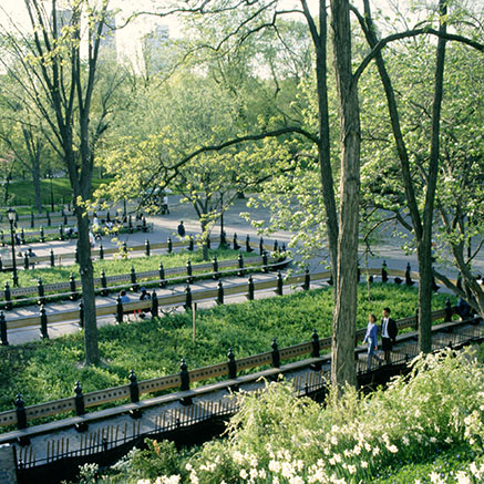 A Photo of Central Park in New York City