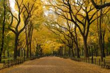 A park road lined with trees in autumn